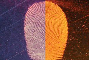 Blitz-Red™ Magnetic Fluorescent Fingerprint Powder